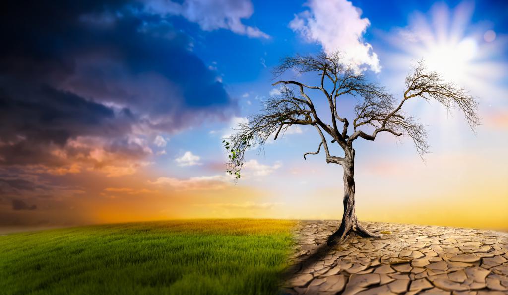 Stanowisko w sprawie propozycji Europejskiego prawa o klimacie