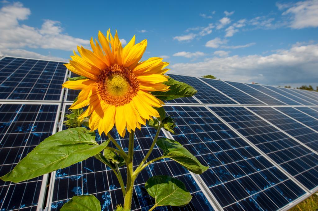 Wodór, słońce, wiatr: które z technologii przyczynią się do transformacji energetycznej Europy